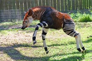 Animales extraños en peligro de extinción